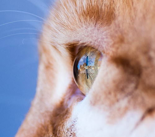 Arthas's eye macro (detail)