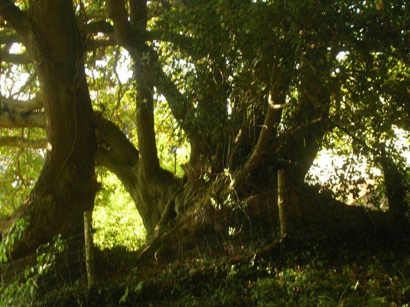 Tree Stonegate circular