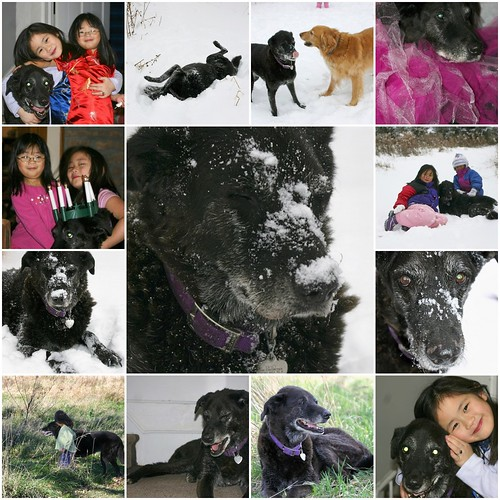 In Loving Memory of Casey - April 20, 1995-February 13, 2008