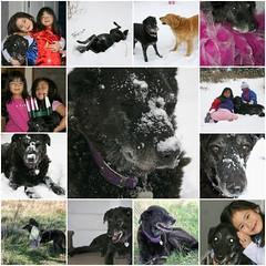 In Loving Memory of Casey - April 20, 1995-February 13, 2008