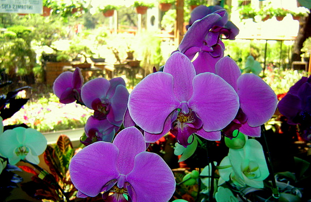 Flickriver photoset 39 jardin japones de palermo bs as for Amapola jardin de infantes palermo