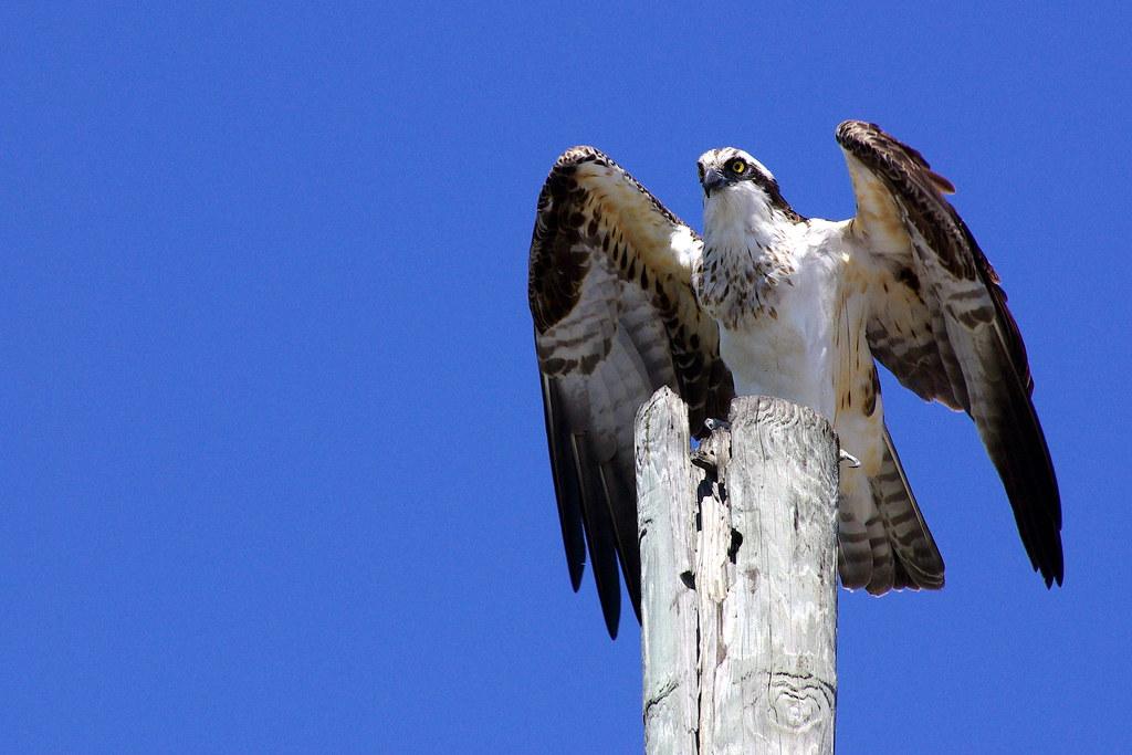 Osprey Pre-Flight