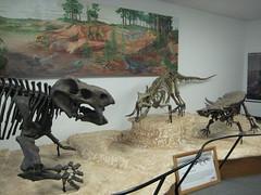 tyrannosaurus(0.0), sculpture(0.0), mural(0.0), tourist attraction(1.0), art(1.0), museum(1.0), velociraptor(1.0), dinosaur(1.0),