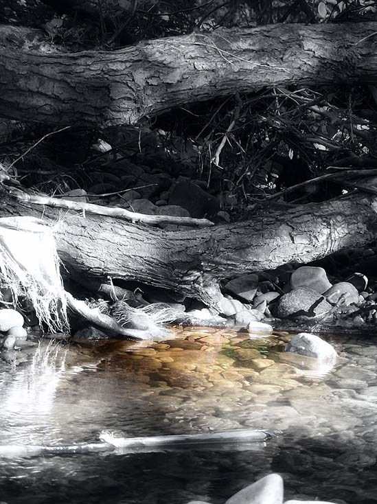 Photography - Wood Stream by Nicholas M Vivian