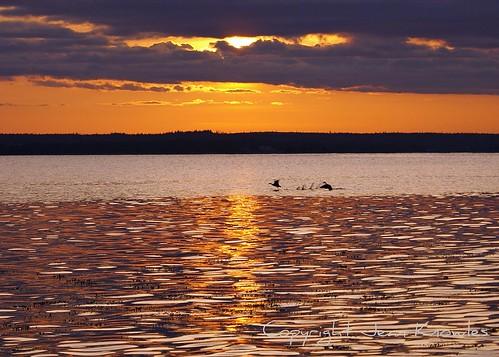 sunset reflections glow novascotia purple sundown dusk ducks arr geotag picnik southshore allrightsreserved atlanticcanada shelburnecounty naturesgallery theloveshack barringtonbay sebimbeach amazingamateur nottobeusedwithoutmypermission digifotopro flickrofhope copyrightjeanknowles