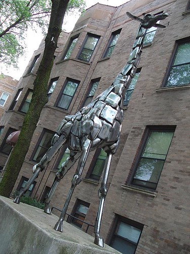 John Kearney Giraffe