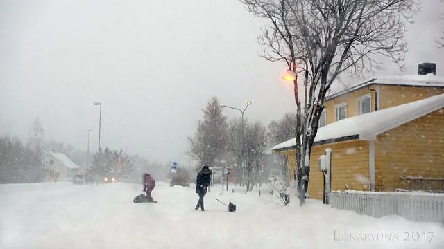 Dog walking in the blizzard Lofoten style :p