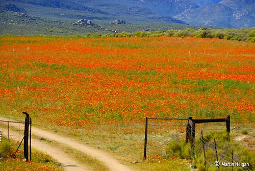 Namaqualand Driveway