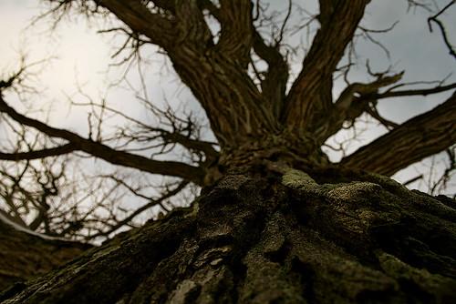 park ontario canada tree del digital canon dark eos rebel scary branches el creepy darlington labyrinth sergei faun provincial pans laberinto courtice fauno xti 400d yahchybekov serhio serhiophoto