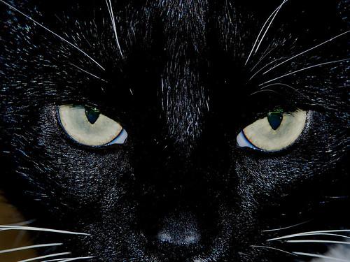 blackcat noir gatto poses hypno ohenry ocrazy anawesomeshot andsendsamessage anotherfavoritething hiseyecolorchangesasifheischannelingachamelion