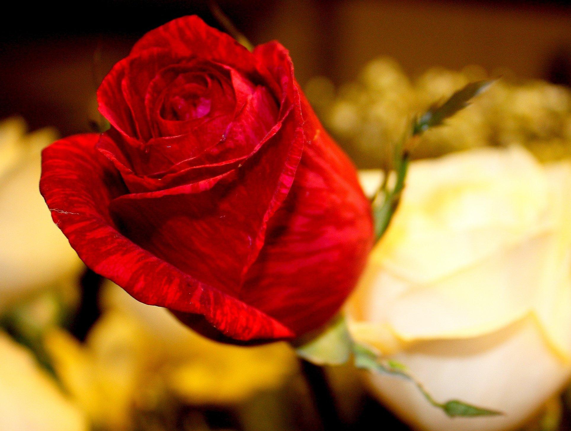 , صور ورد جميل جدا, صور زهور جميلة جدا