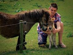 stallion(0.0), trail riding(0.0), animal(1.0), farm(1.0), grass(1.0), mammal(1.0), horse(1.0), meadow(1.0), pasture(1.0), pony(1.0), rural area(1.0),