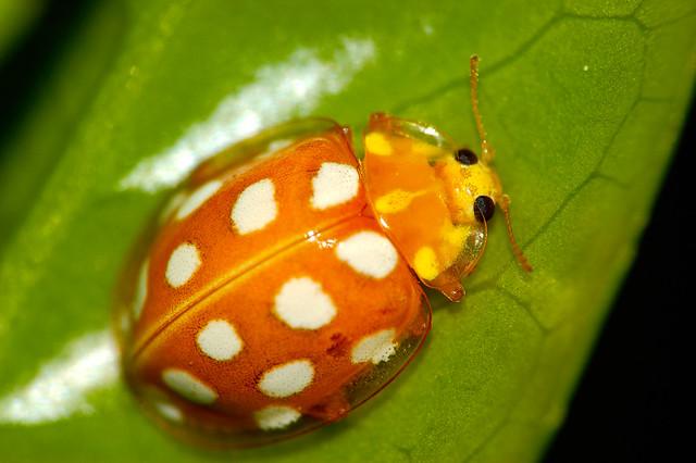 Ladybug Ladybug - a gallery on Flickr