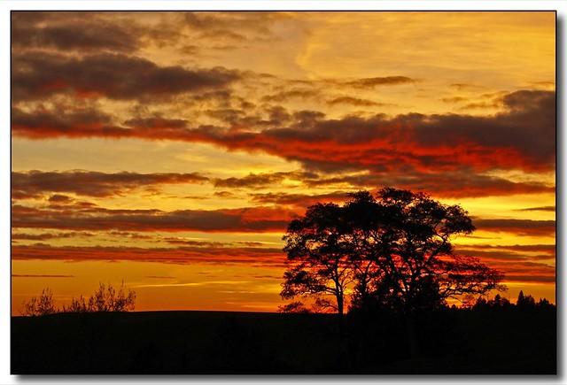 Sunset Silhouette (3)