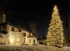 Photograph: lit-tree-house.jpg