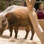 San Diego Zoo 074
