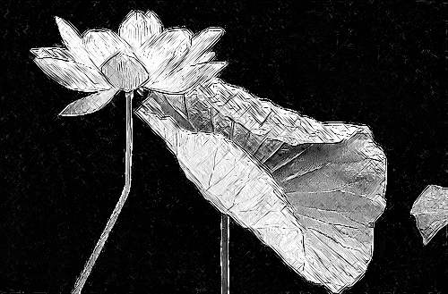 Lotus Flower and leaf Photo based pencil charcoal Sketch