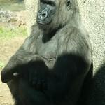 Los Angeles Zoo 029