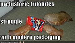 Why the trilobites went extinct