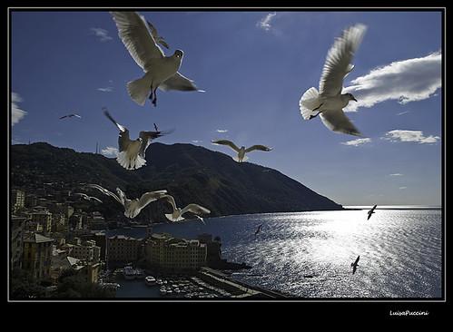 sea bravo italia seagull liguria camogli gabbiani magicdonkey nikond80 anawesomeshot ultimateshot
