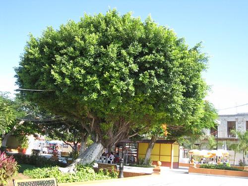 Vive el turismo rural en Cozumel
