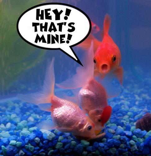 My Funny Goldfish Flickr Photo Sharing