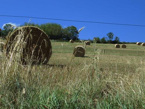 20130820 12 195 Jakobus Bäume Strohballen Feld