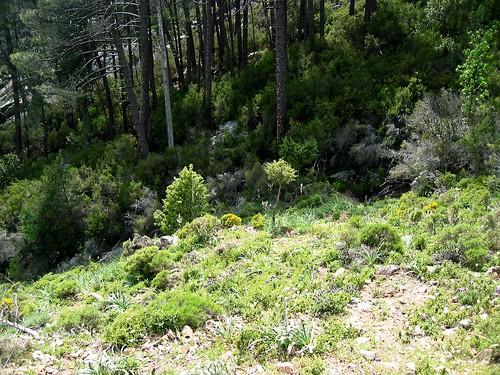 Le sentier perdu des bergeries de Firuleta dans la région d'Ota