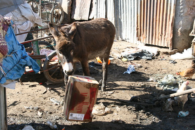 Donkey Eating Cigarettes by Kevin Hoogheem, on Flickr