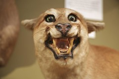 Crazy Taxidermy