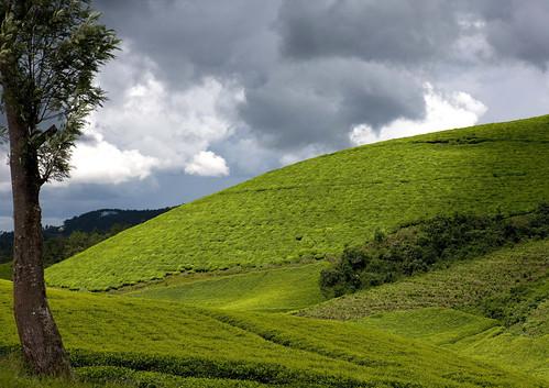 africa montagne landscape outdoors highlands altitude nopeople rwanda afrika paysage commonwealth teaplantation afrique eastafrica 1630 centralafrica kinyarwanda ruanda afriquecentrale רואנדה hautesterres 卢旺达 르완다 盧安達 republicofrwanda руанда رواندا ruandesa plantationdethe