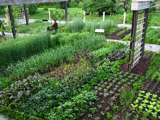The Herb Garden after heavy May rain. Photo by Rebecca Bullene.