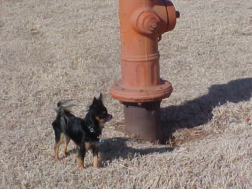 Itzl at Fire Hydrant
