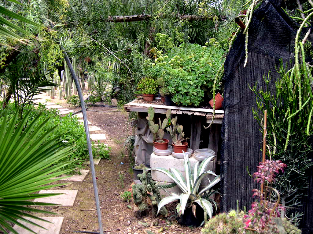 Fotos de jardines de cactus o de suculentas pgina 3 for Infos jardin