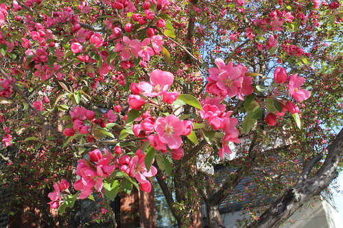 Spring 2011 Blossoms