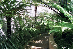 Sheffield Botanical Garden July 2005