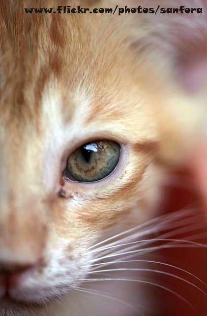 Abused Cats May Seem To Remember Through Fear, Owners That