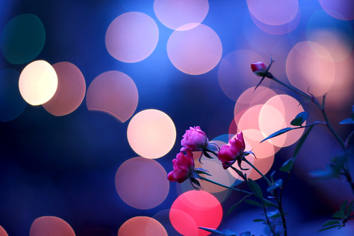 ●○ bokeh fairyland ○●