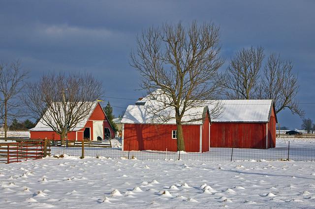 Red barns in Swedesburg, Iowa