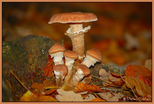 mushroom forest natur fungi luxembourg paysage pilze landschaft wald b4 beaufort wandern luxemburg picnik müllertal indiansummer wanderweg blueribbonwinner befort mullertal roseawards muellertal
