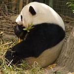 San Diego Zoo 092