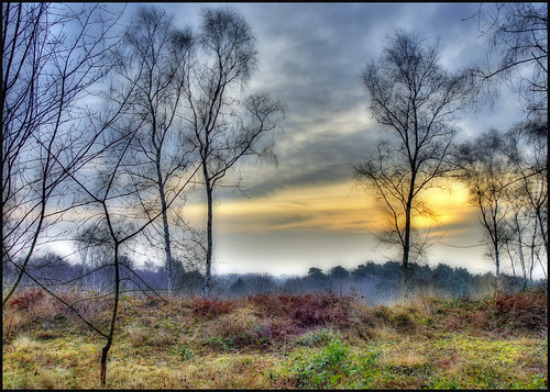 morning trees sunrise olympus hdr heathland e510 supershot tonemapping photomatrix hdrandblending
