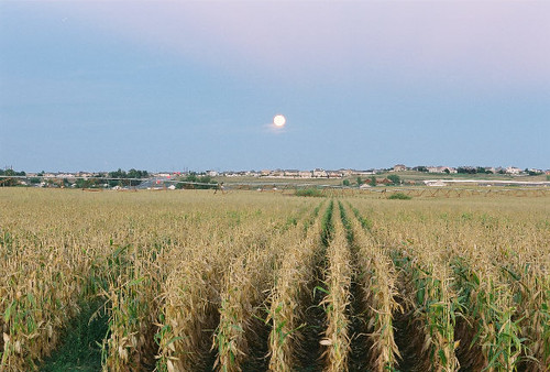 moon film field night print geotagged evening twilight corn nikon colorado farm moonrise n80 nikonn80 harvestmoon greeley weldcounty