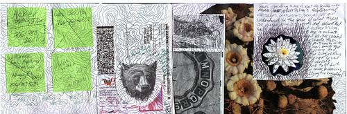 Bear, Topography, Flowers