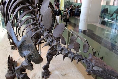 NYC – AMNH: Hall of Ornithischian Dinosaurs – Stegosaurus