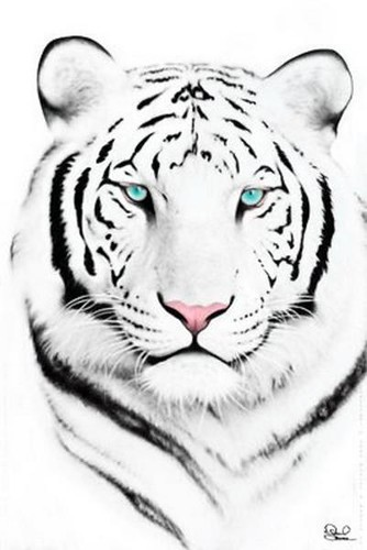 Line Drawing Tiger Face : White tiger face flickr photo sharing