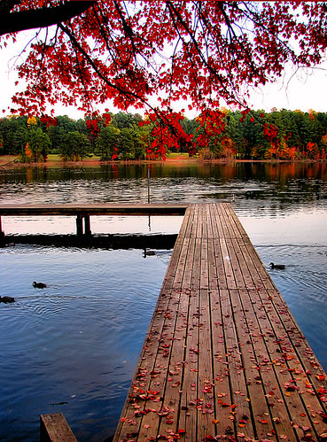 park blue autumn trees red lake tree fall water leaves landscape pier geese nc dock branch seasons north ducks northcarolina raleigh foliage shore carolina chrysti eow shelleylake superhearts