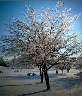 A sparkling tree of ice
