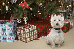 Wee Westie Christmas 2007