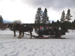 racing(0.0), winter sport(1.0), winter(1.0), vehicle(1.0), snow(1.0), dog sled(1.0), land vehicle(1.0), sled(1.0),